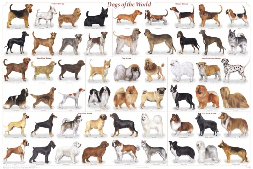 Dog Breeds Pictures