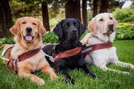 Guide Dog Federation