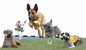 International Guide Dog Federation US